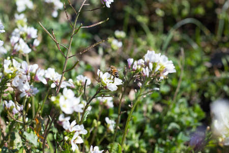 Bee on Wildflowers Stock Photo