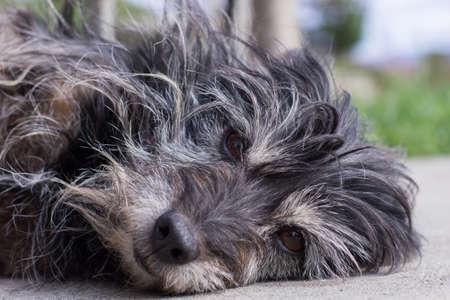 Domestic Black Dog in the Garden Stock Photo