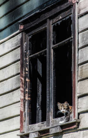 Cat looking out of the window of an abandoned house in Patagonia 写真素材 - 117013383