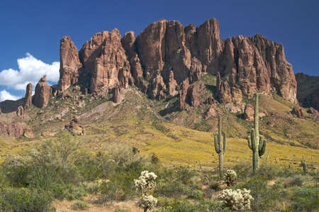 superstition: Saguaros in Superstition Wilderness.
