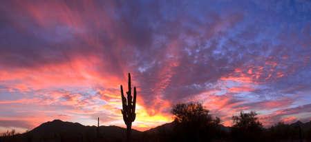 vistas: Saguaro silhouette with sunset lit red sky. Stock Photo