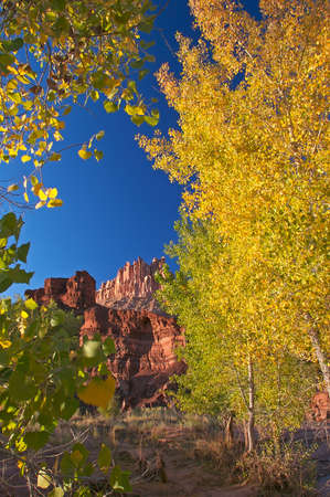 The Castle in Capitol Reef National Park framed with trees autumn in colors.  photo