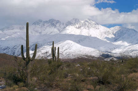 Saguaro in snow after snow storm. Stock Photo - 2265327