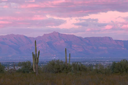 Saguaros and Sunset lit Superstition Mountains in background.  Stock Photo