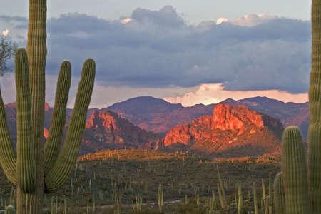 Sunset lit butte framed with Saguaros.