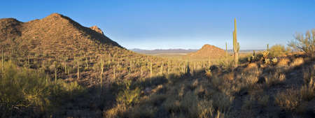 Sun rays sneaking into valley dotted with Saguaros. photo