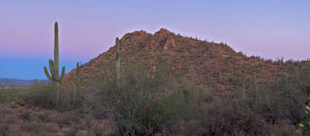 sunup: Sunrise in Sonoran Desert with pastel sky and Saguaros.