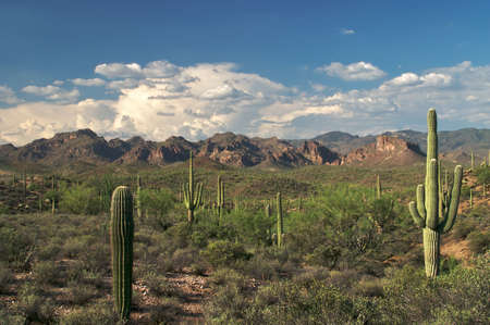 superstition: Beautiful view of Superstition Wilderness in Sonoran Desert. Stock Photo