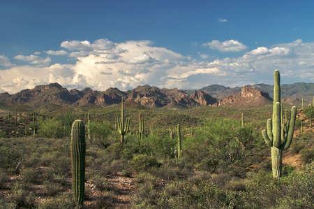 sonoran desert: Beautiful view of Superstition Wilderness in Sonoran Desert. Stock Photo