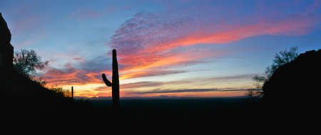 Sunset lit red and blue sky wit Saguaro silhouette. Stock Photo - 3390742