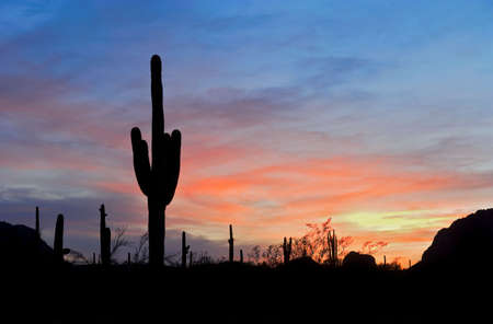 desert sunset: Saguaro silhouette in red sunset lit clouds. Stock Photo