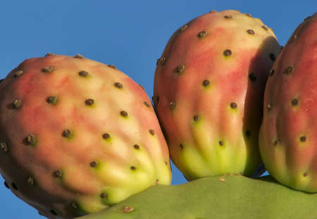Clouse up picture of Prickly Pear Cactus fruits.