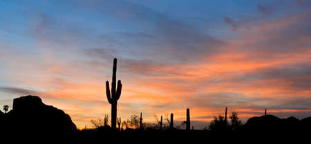 saguaro: Saguaro silhouette in red sunset lit clouds. Stock Photo