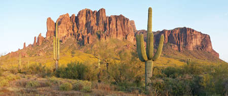 superstition: Saguaros and Superstition Mountains catching the dayslast light.