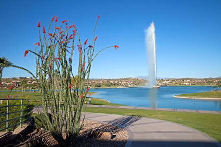 ocotillo: Ocotillo and water fountain in park.