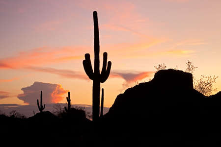 saguaro: Sunset lit red clouds in Sonoran Desert, and Saguaro silhouetten.