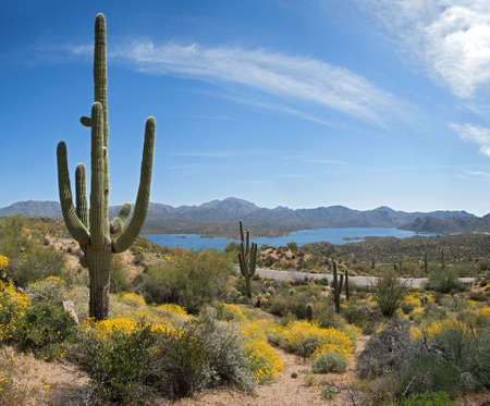 saguaro: Saguaros and Bartlett Lake in Sonoran Desert. Stock Photo