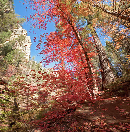 Embracement from nature, in West Fork Oak Creek Canyon.