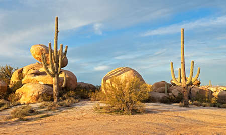 sonoran desert: Saguaros and boulders catching days last light. Stock Photo