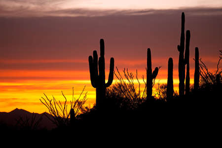 Saguaro and Ocotillo silhouetten at sunset on Apache Trail.