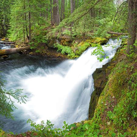 whitehorse: Whitehorse Falls in Cascade Range, Oregon.