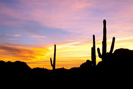 Saguaro silhouette in red blue sky.