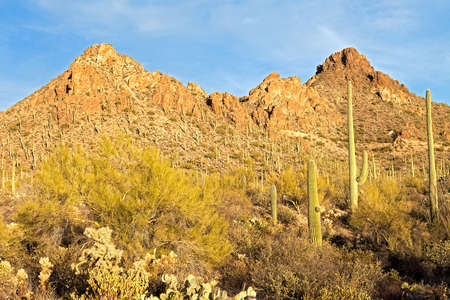 Sunset lit Tucson Mountains and Saguaros. photo