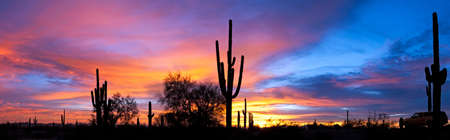 plantas del desierto: Saguaro silhouetten en el atardecer del desierto de Sonora iluminado el cielo.