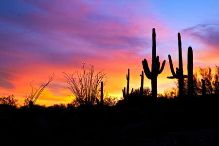 plantas del desierto: Saguaro silhouetten en la puesta de sol ardiente desierto de Sonora iluminado el cielo.