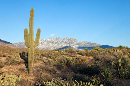 four peaks wilderness: Snow covered Four Peaks rising out of Sonoran Desert. Stock Photo