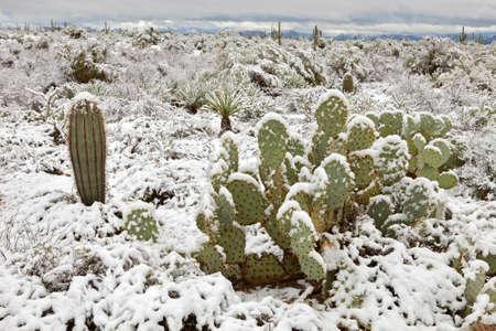 four peaks wilderness: Snow covered Sonoran Desert. Stock Photo