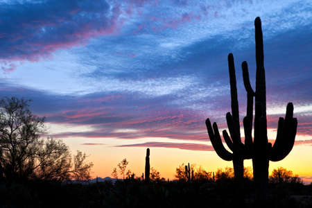 Saguaro silhouetten in Sonoran Desert sunset lit sky. Фото со стока - 9449711