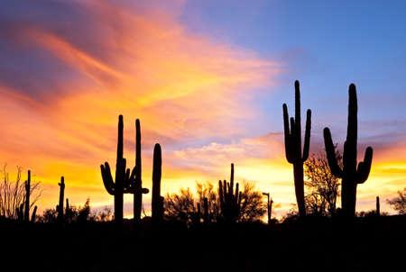 plantas del desierto: Puesta de sol ardiente desierto de Sonora.
