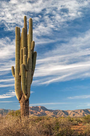 desert ecosystem: Saguaro and Mazatzal Mountains in Four Peaks Wilderness.