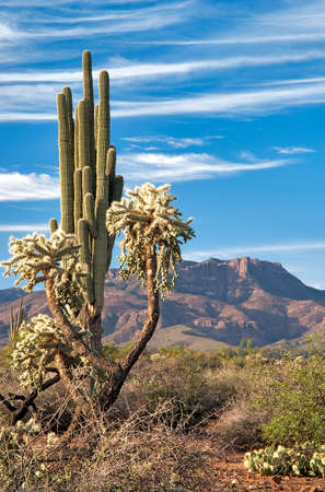 Saguaro and Mazatzal Mountains in Sonoran Desert. 免版税图像