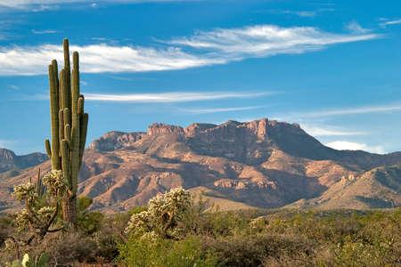 Saguaro and Mazatzal Mountains in Sonoran Desert. 写真素材