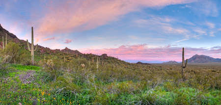 cholla cactus: Sunrise over Picacho Peak State Park. HDR composition.