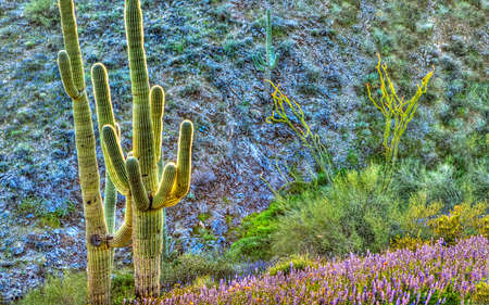 Surreal HDR composition of Saguaros. photo