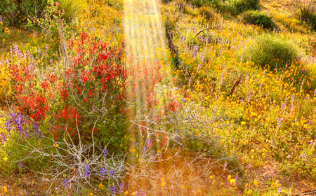 desert ecosystem: Early morning sun rays raining on blooming desert  Stock Photo