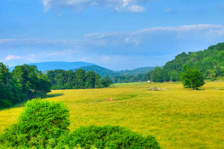west virginia trees: Pasture in West Virginia
