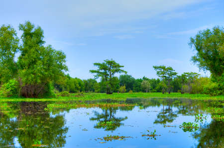 sycamore: Swamp with Cypress Trees in Atchafalaya River Basin  Stock Photo