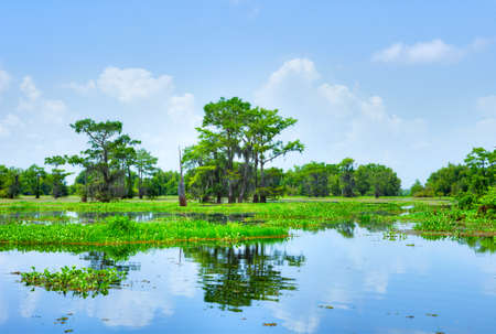 basin: Atchafalaya River Basin, with Cypress trees  Stock Photo
