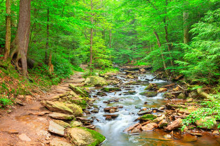 hemlock: Falls Trail serpentea a lo largo de un arroyo del bosque
