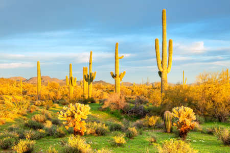Sonoran Desert bathing in day photo
