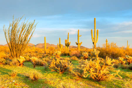 desert ecosystem: Sonoran Desert bathing in day Stock Photo