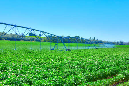 potato field: Potato farm in Idaho.