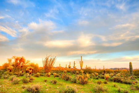 desert ecosystem: Sonoran Desert at sunset  Stock Photo