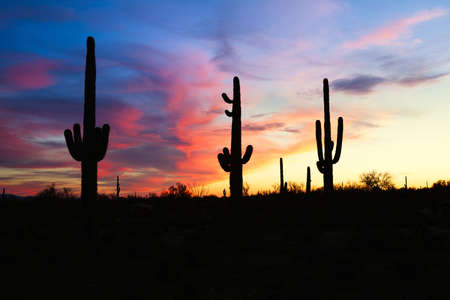 desert ecosystem: Silhouetten of Saguaros at sunset, with blood red sky  Stock Photo