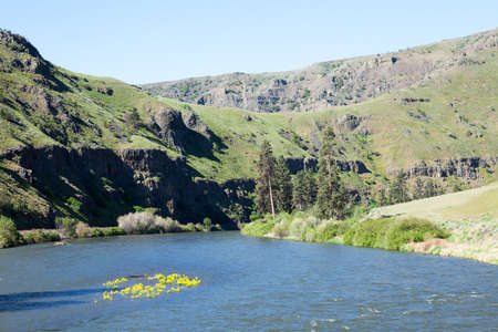 Yakima River Gorge, with water lily