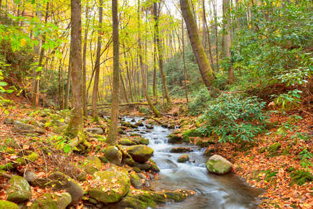 dogwood tree: Roaring Fork Creek cascades through a lush forest and mossy boulders, Great Smoky Mountains National Park, Tennessee